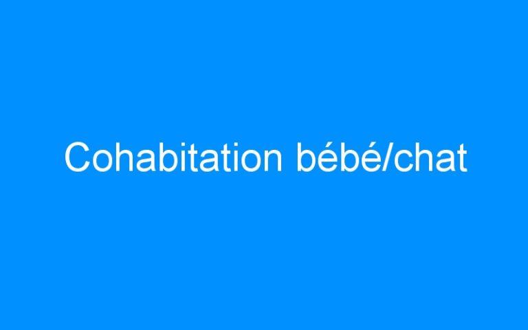 Cohabitation bébé/chat